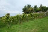 Clos d'Antheit - Wanze - Vignoble