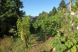 Clos du Beau Rosier - Huy - Vignes