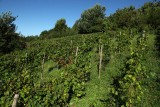 Clos de la Buissière - Huy - Vignoble