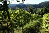Clos de la Buissière - Huy - Vignoble et paysage