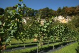 Clos de la Carrière - Moha - Vignes