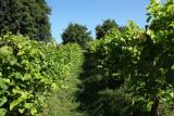 Vignoble-domaine-chateau-dalhem