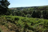 Domaine Château Dalhem - Dalhem - Vignes et paysage