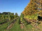Domaine Montulet - Dalhem - Vignes