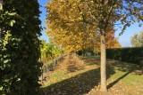Domaine Montulet - Dalhem - Allée et vignes