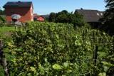 Clos des Terrasses - Amay - Vignes