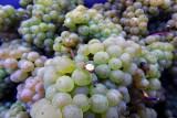 Clos des Troenes - Amay - Raisins