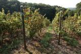Vignes-vue-haut-rognac
