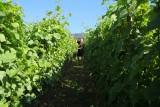 Proprietaire-vin-des-cretes
