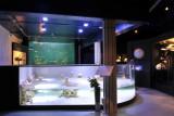 Aquarium-Museum - Liège - Aquariums