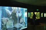 Aquarium int © FTPL-Yves Gabriel