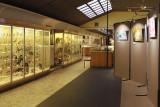 Aquarium-Muséum Liège - Faune belge