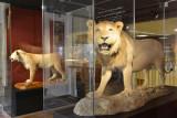Aquarium-Muséum Liège - Salle TréZOOr