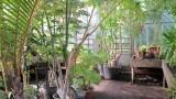Serre aux palmiers jardin botanique de Liège
