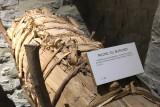 Musée de l'Abeille - Tilff - Ruche africaine