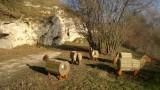 P11-Montagne St Pierre-moutons bois