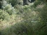 Reserve forestire Grande Va Ferrière 3