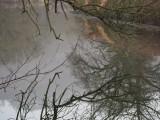 1. Comblain-au-Pont - Canal de l'Ourthe a? Poulseur - © Franc?ois Louon, de?cembre 2016 - 2