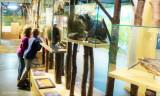 Musée de la Forêt 5