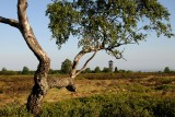 Parc naturel des Sources - spa - Arbre et plaine