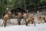 Stavelot Wild Park Coo Parc a Gibier Coo Adventure MGL0298 © Laboureur M...