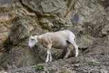 Stavelot Wild Park Coo Parc a Gibier Coo Adventure MGL0261 © Laboureur M...