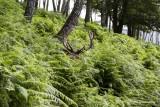 Stavelot Wild Park Coo Parc a Gibier Coo Adventure MGL0214 © Laboureur M...