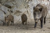 Stavelot Wild Park Coo Parc a Gibier Coo Adventure MGL0252 © Laboureur M...