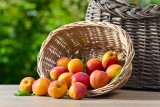 Panier-abricots