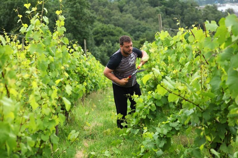 Domaine Celiandre - Flémalle - Vue vignes