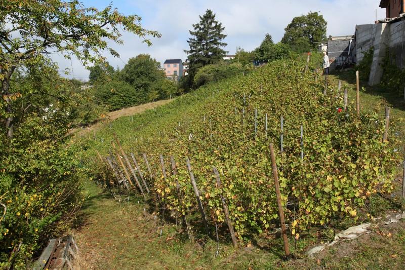 Coteaux de la Légia - Ans - Vignoble