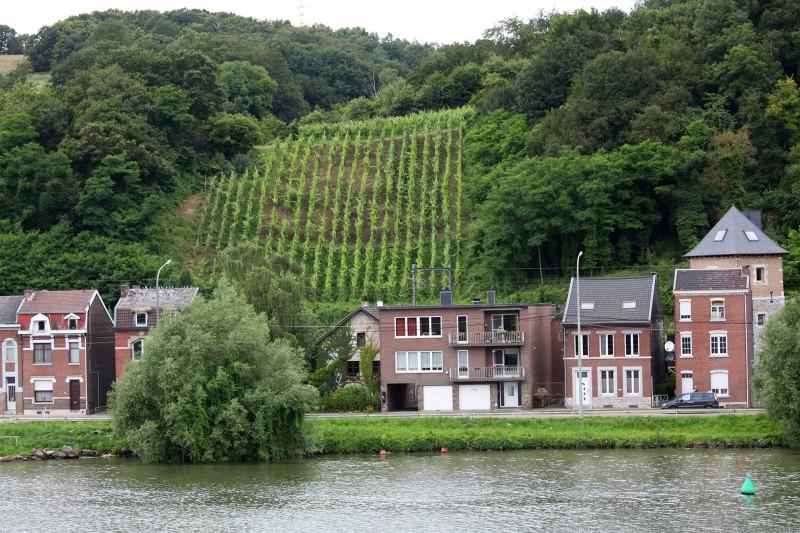 Vignoble-coteaux-de-dame-palate