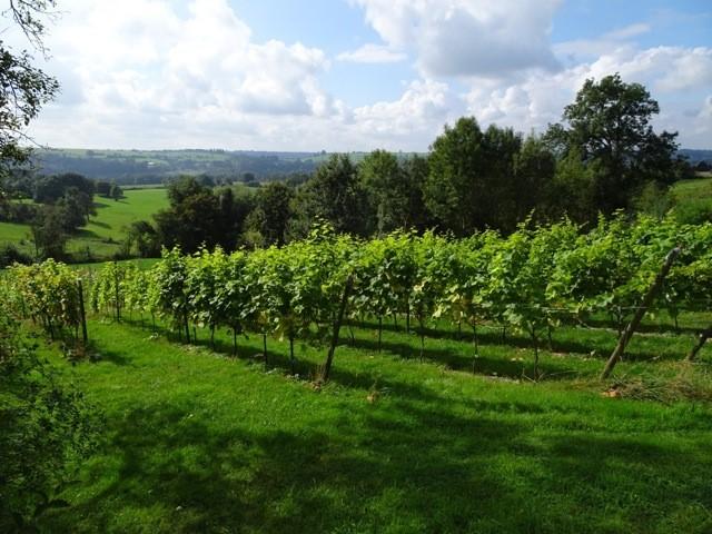 Coteaux de Lincé - Sprimont - Vignoble