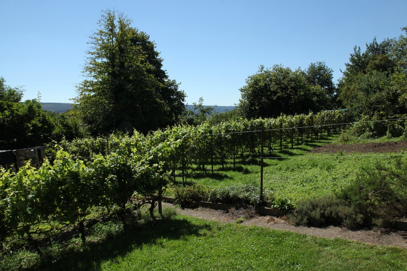 Clos des Terrasses - Amay - Vignoble et paysage