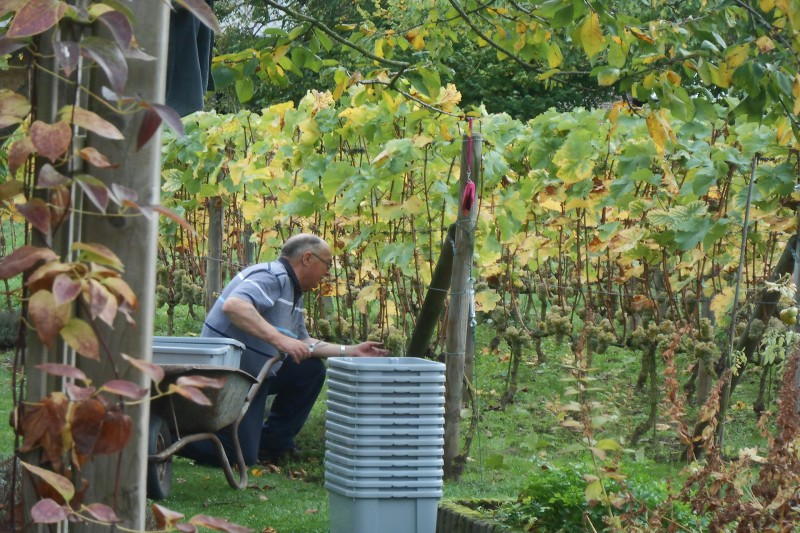 Clos des Troenes - Amay - Vignes