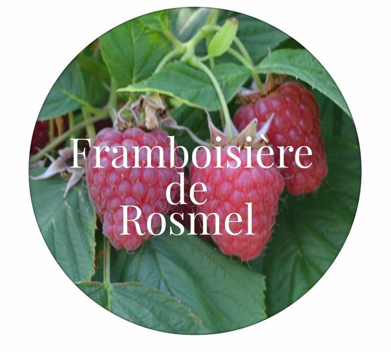 Framboisière de Rosmel