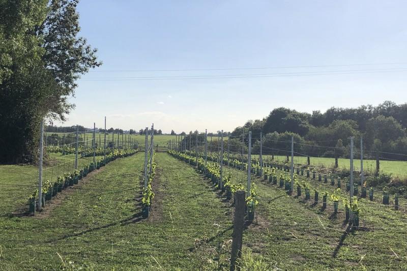 Domaine de la Feuille - Dalhem Neufchateau - Vignobles