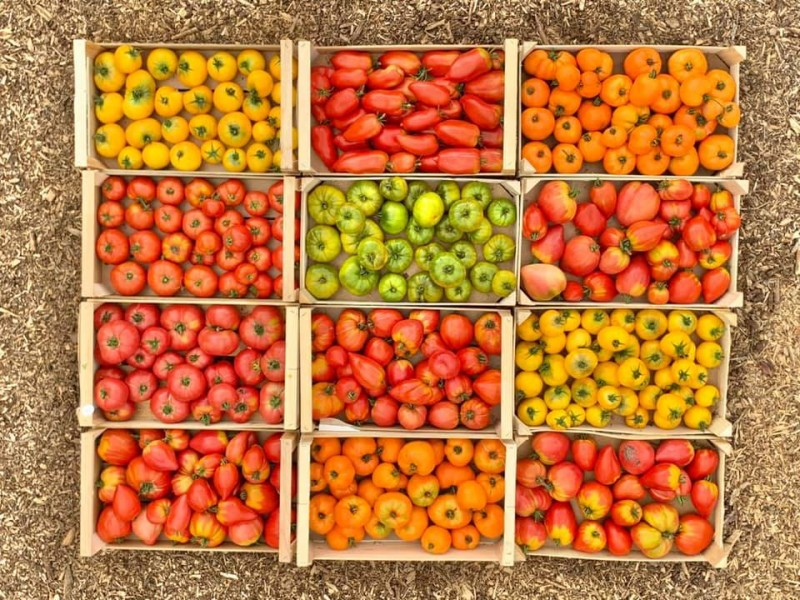 Au Top'in en Bourg - tomates