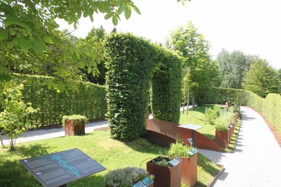 Elsenborn herba sana 26 c ortis