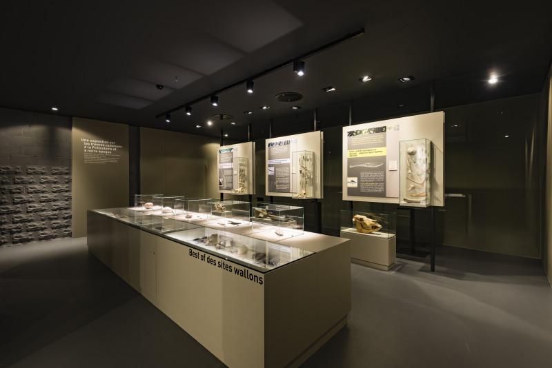 Préhistomuseum - Flémalle - Comptoir expo intérieur musée