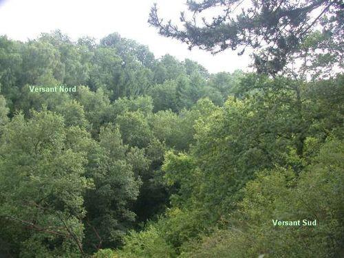 Reserve forestire Grande Va Ferrière 1