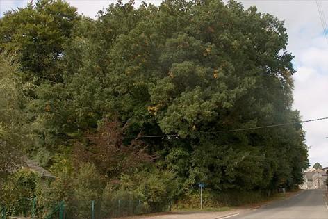 Séquoias du Parc de Florzé