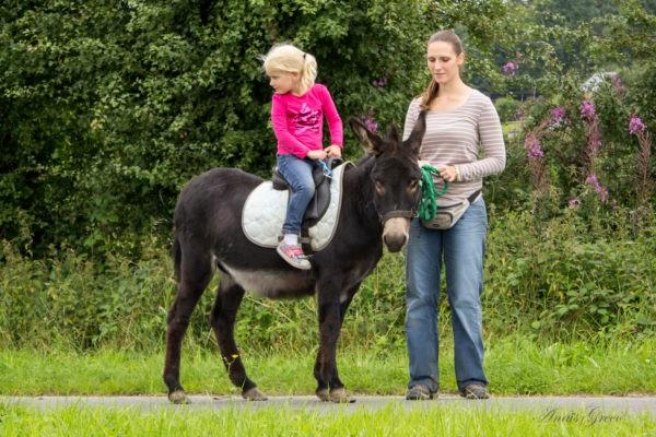 Balade à dos d'ânes ou poneys en autonomie