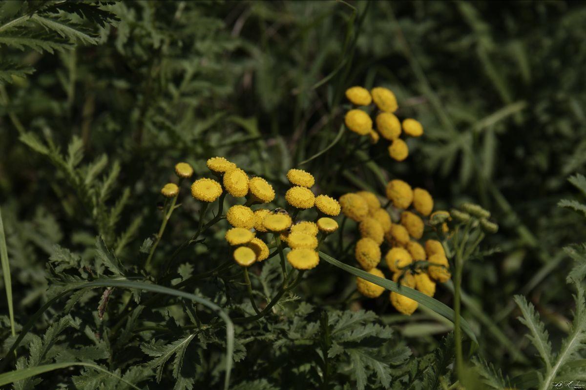 Les plantes sauvages utiles