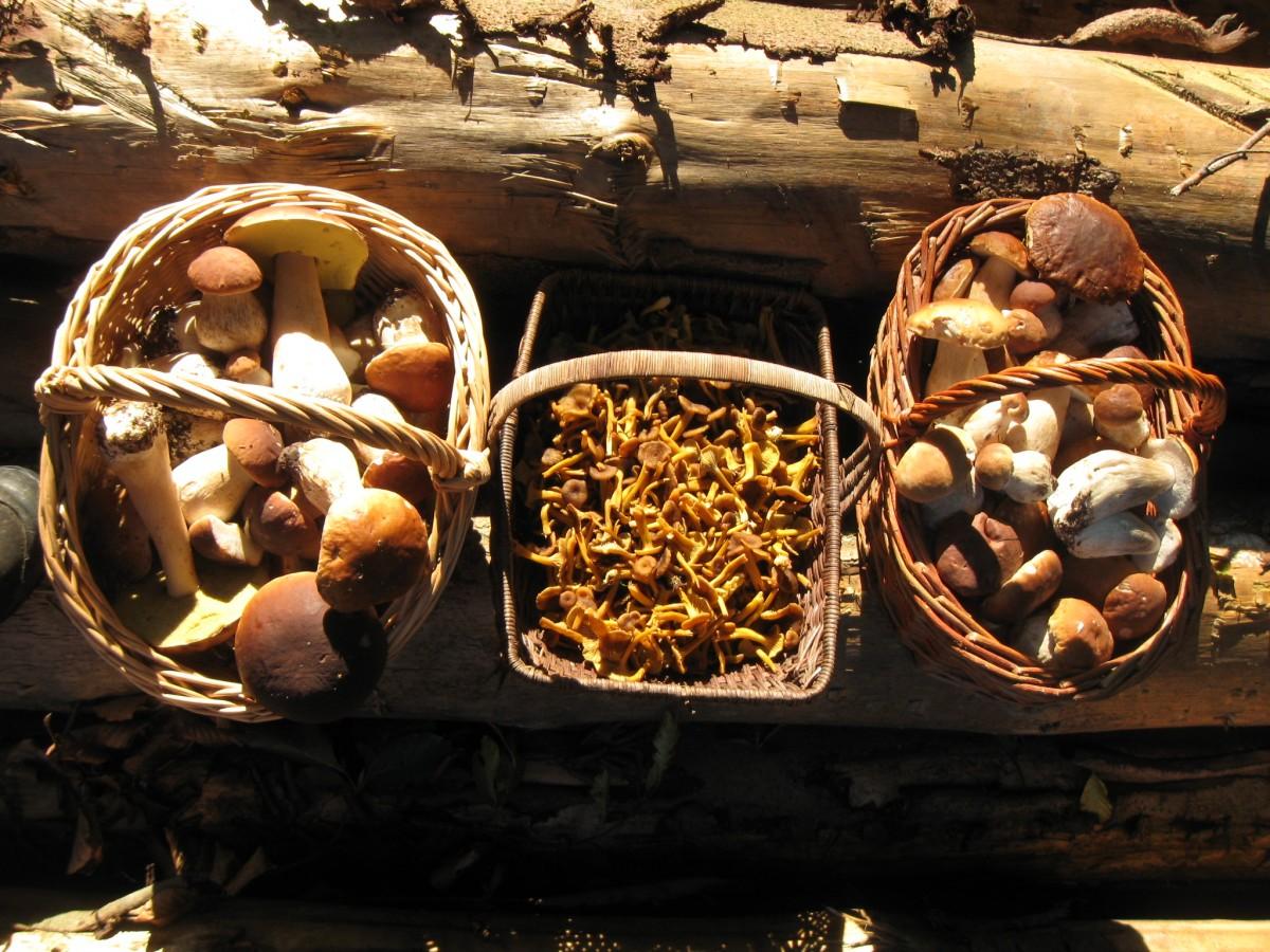 Le monde mystérieux des champignons
