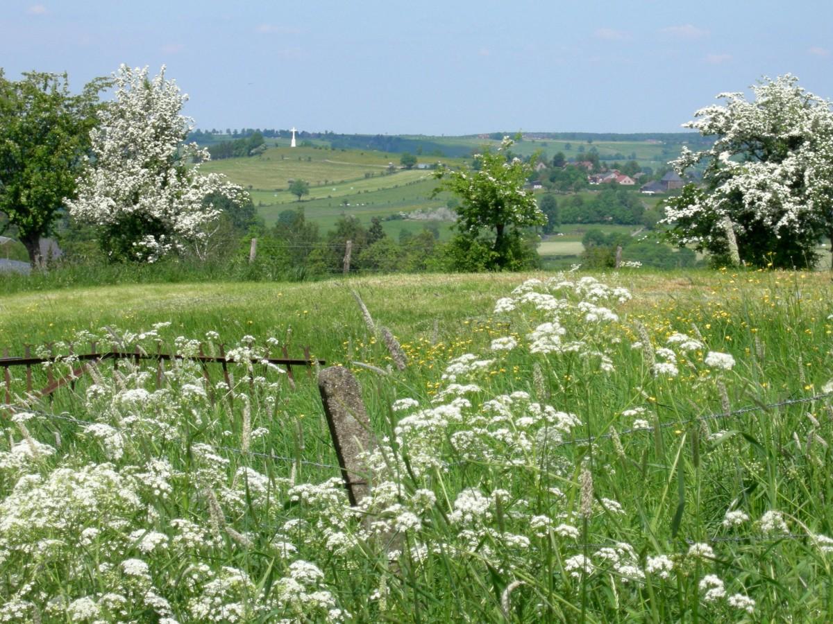 Herve_Charneux printemps Bois del Fiesse