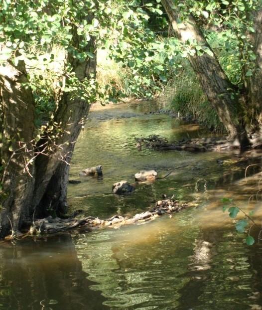Balade autour du ruisseau d'Asse 2