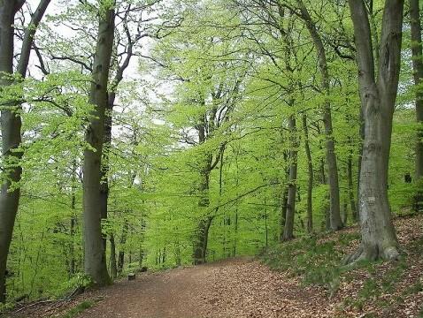A la découverte des arbres.