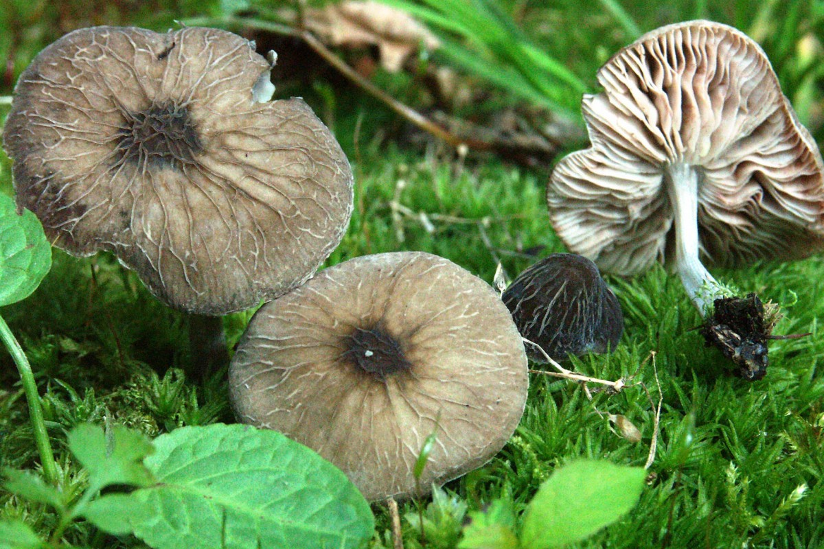 Balade champignons