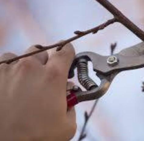 Taille arbre fruitier - Comblain